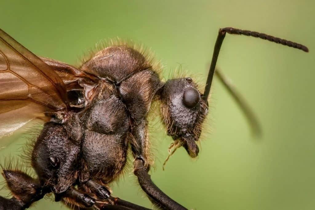 Peels from citrus fruits kill ants