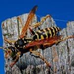 Best Wasp Fogger