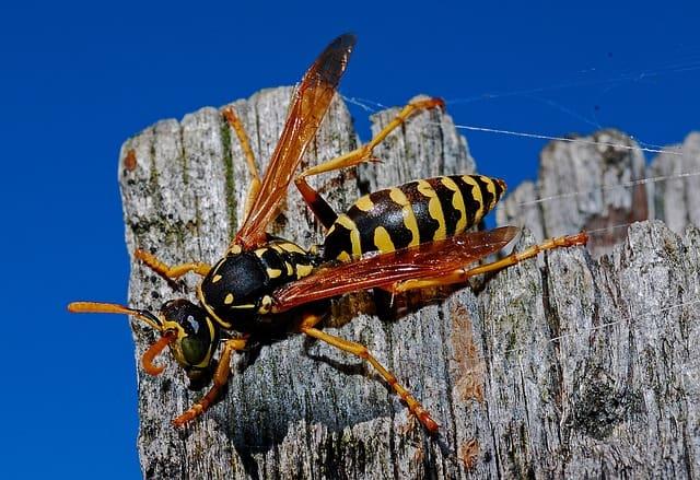 7 Best Wasp Fogger For 2020 Reviewed Pestmethods
