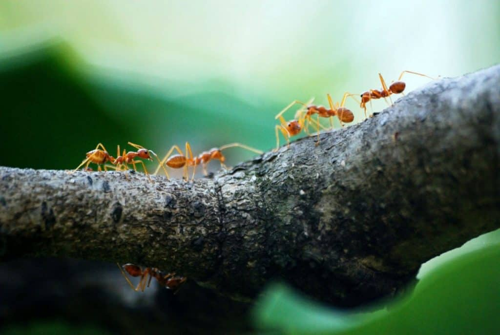 Ants in a garden