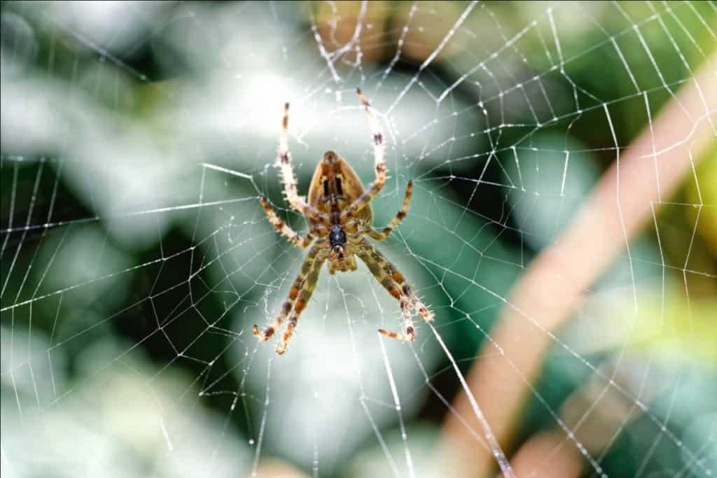 Best Fogger for Spiders