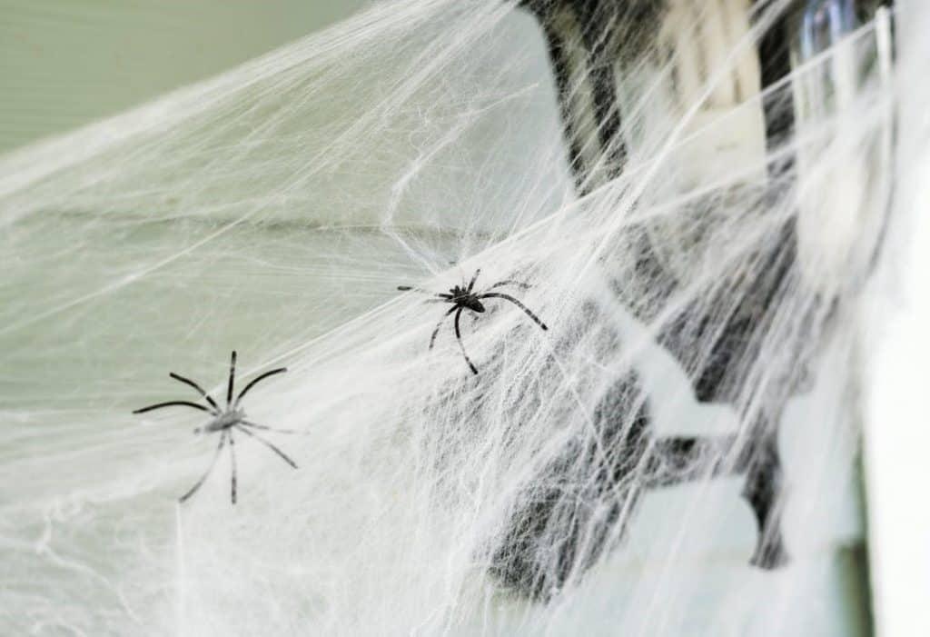 Best Spider Killer Sprays for Indoors
