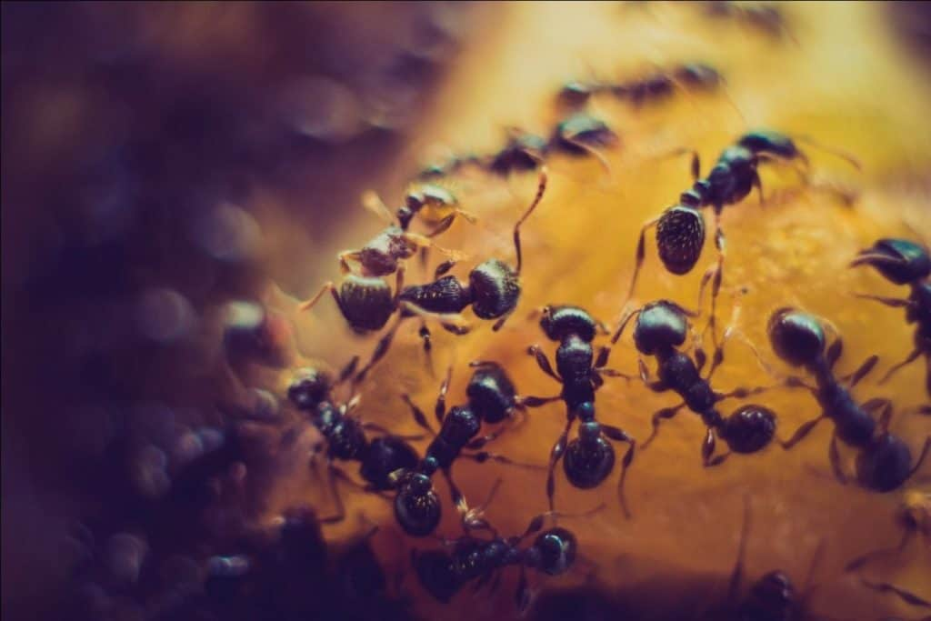 How to get rid of ants in car