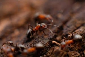 an image of an ant colony