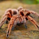 Do Spiders Poop?