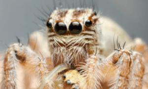 Do Spiders Have Bones?