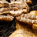 Do Spiders Have Brains?