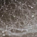 Do Spiders Hibernate
